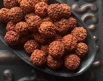 12mm Rudraksha Seeds Natural Seed Beads Package of 10 Beads