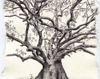 """Signed, limited edition print of drawing #111 from my """"Secret Life of Trees"""" project"""