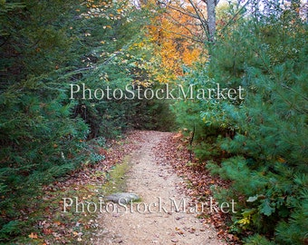 Forest Backdrop, New England Fall, Photography Backdrop, Digital backdrop, Photoshop background, Evergreens, Fall leaves, Country Path