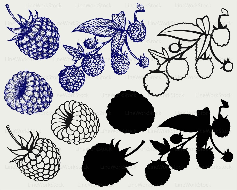 Lampone in formato svg clipart frutta svg sagoma for Clipart frutta