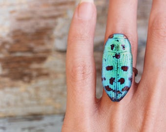 Insect ring , Blue Beetle ring , Blue bug ring , Statement ring , Insect jewelry , Beetles lover Insects lover Bug gift idea Bugs lover