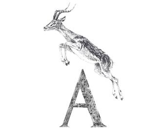 A for Antelope A4 signed limited edition print