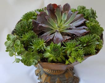Graceful Urn overflowing with live mixed succulents