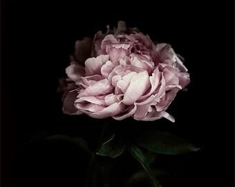 Peony print, Digital Download, Instant Download, Peony Photography, Pink Flower, Pink Flower, Flower Print, Pink Peony