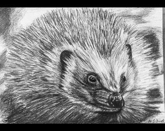 Hand-drawn Hedgehog Print