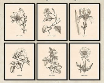 Digital prints, Vintage print set, Wall art, Floral print set, Set of 6 prints, Antique flower print, Large botanical print set, Lily, Poppy