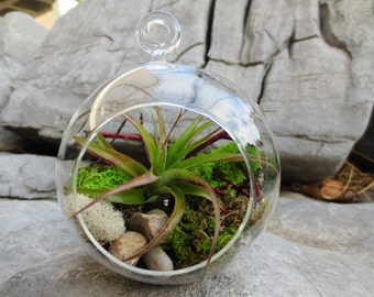 Woodland Air Plant Terrarium Kit / DIY Tillandsia Terrarium Kit / Create Your Own Air Plant Terrarium