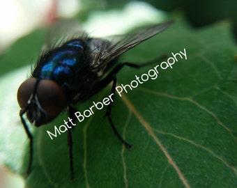 Macro Fly Photo Print