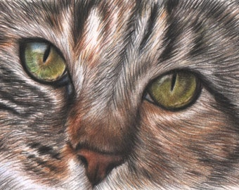 Miniature drawing - ACEO - Original drawing of a cat - Cat drawing made with Polychromos colored pencils