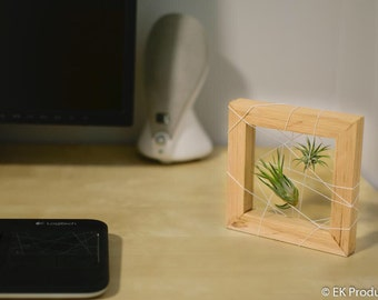 Western Red Wood Framed Airplant String Display with Air Plant - Small