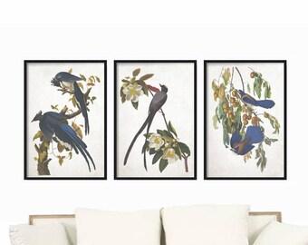 Vintage Print set - Wall Art Print - Home Decor - Bird Prints - Wall Art - Prints - Large Bird Prints - Farmhouse Decor - Rustic Decor