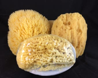 Handmade Goat Milk Soap with Natural Sea Sponge
