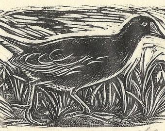 Moorhen Original Wood Engraving