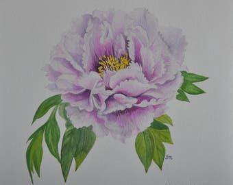 "Japanese peony, botanical print, 14""x14"","