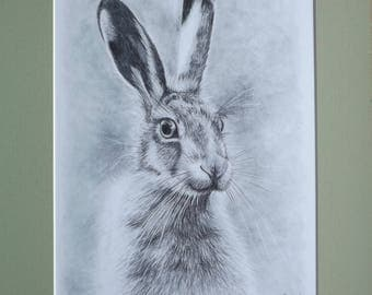 Hare A4 Fine Art Print with Pale Green Mount Board