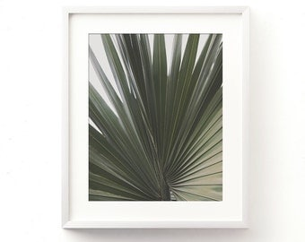 palm tree frond photo, tropical photography, green wall art, minimalist decor, garden, botanical print, California home, modern print, jpg