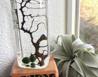 Tower Moss Ball Terrarium