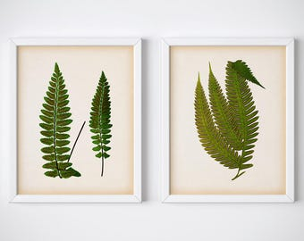 8x10, 11x14 Instant download fern print set, Wall art set, Printable set, Antique fern prints, Set of 2 botanical prints, Botanical art, JPG