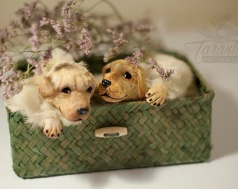 PREORDER: cute floppy dog (labrador puppy)