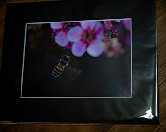 5x7 matted print, cherry blossom, bee, fine art print