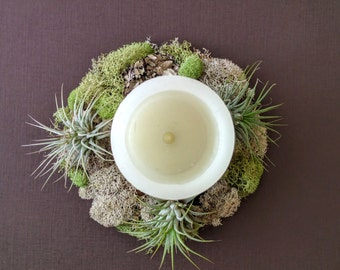 Living Wreath Table Centerpiece with Air Plants, Lichen and Moss