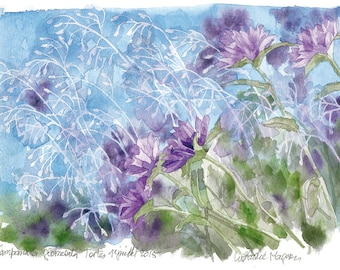 Original watercolor Campanula