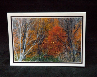 Autumn In The Woods 5x7 Blank Card By Thomas Minutolo