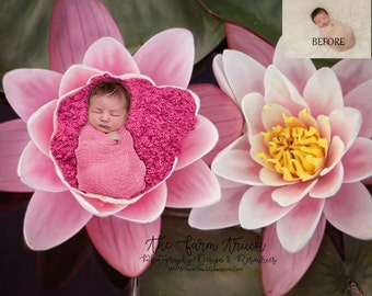 Newborn flower Digital Background, Newborn Digital backdrop, Lilly pad floating, frog pond background, used for boys or girls