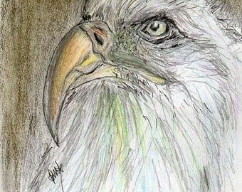 Eagle Portrait -  Mixed Media