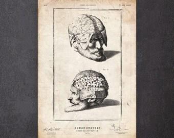Dark art print Brain anatomy poster Human anatomy print Surgeon gift CA067