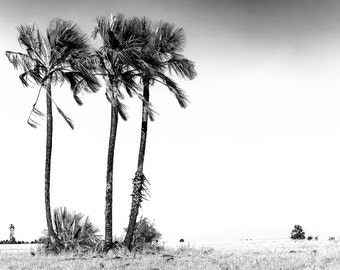 Palm trees in the Kalahari - Botswana
