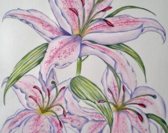 Lily PRINT Pink Stargazer, Lilies, Flowers, Original Watercolour Art, Summer Flowers,
