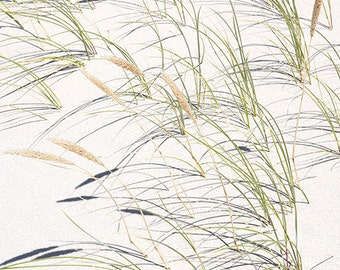 Dune Grasses 4 matted fine art archival print