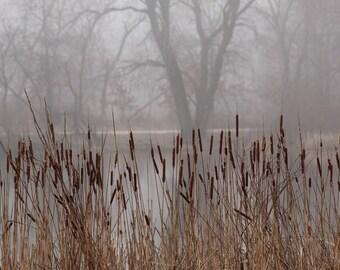Cattails in the fog,foggy,quiet,still,the mist,misty,calm,ripples,water,winter,serenity