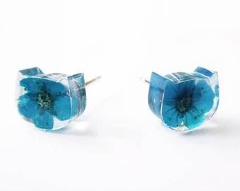 Flowered earrings cat blue - nature jewel resin flowered