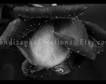 Black and White Rose Wall Art Photograph in Canvas, Metal, or Photo Print