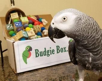 Little Budgie Box