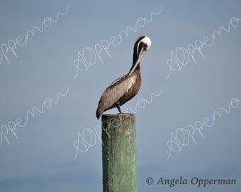 Pelican Pose // Photography // Birds // Instant Download