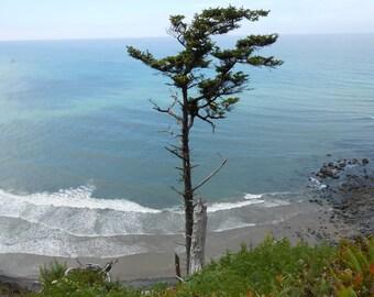 Beach photo taken at Pacific City, Oregon.