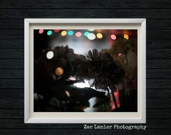Background Patio Lights, Colored Fairy Lights, Colored Light Background,  Flower Arrangements, Blooming