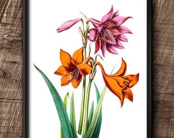 Lilies · 8x10 · Instant Download · Botanical · Flowers · Wall · Printable · Digital File #27