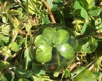 Real Five leaf clover cabochon