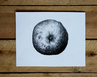 "Original drawing ""Apple"" / from the series kind of fruity / graphite"