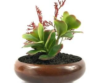 Infinity Plant