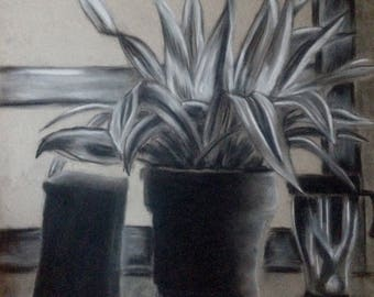 Black and White Plant Charcoal Drawing