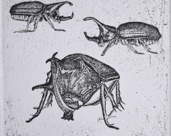 Three Beetles original etching