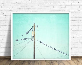 "birds on power line, wall art, art print, large art, large wall art, nature photography, fine art print, canvas art - ""Birds of a Feather"""