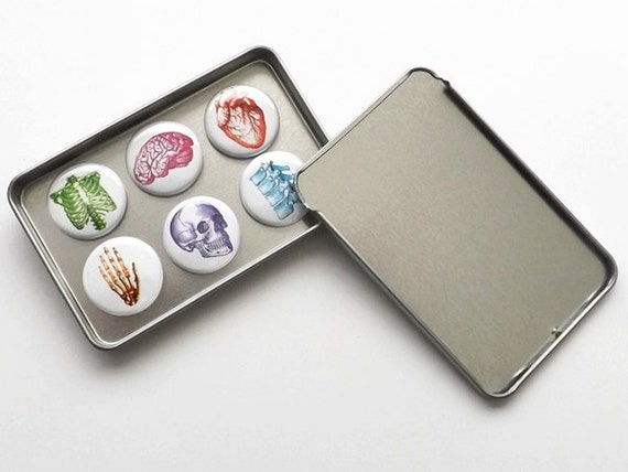 Anatomical Fridge Magnets Set Gift for doctor nurse practitioner medical student heart office dorm decor locker decoration goth home