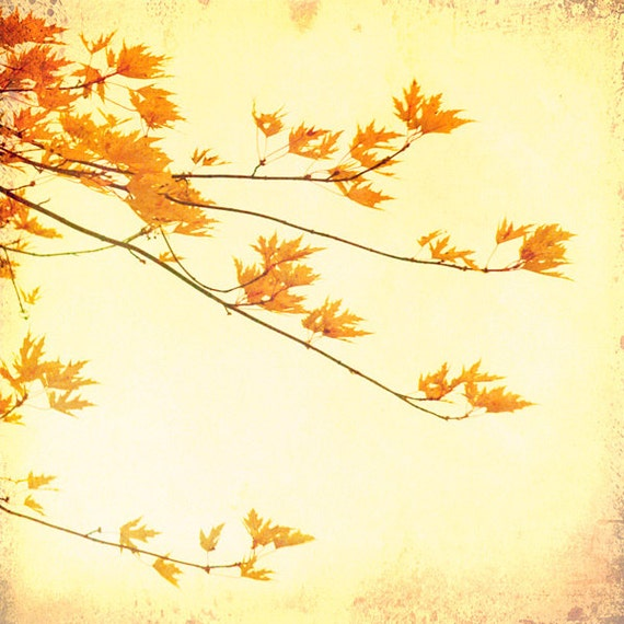 Honey gold photography, amber, fall decor, maple leaves, autumn tree nature print tree bronze bamboo forest wall art by bomobob