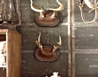 Vintage 1940s Set of Two Real Mounted Deer Antler Plaques